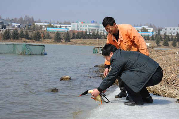 """泉阳泉国家森林公园成为""""中华秋沙鸭""""的温馨港湾"""